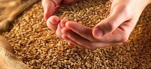 Башкирия готова обеспечить себя продуктами питания на 100%