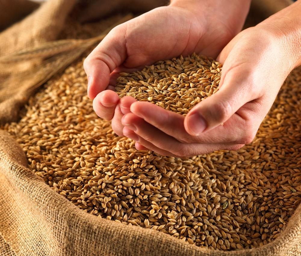 Яценюк: Украинские аграрии готовятся заместить РФ на турецком рынке