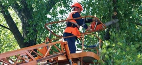Власти города потребовали остановить незаконное строительство в лесопарковой зоне