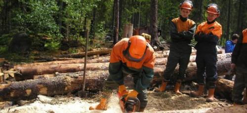 Лесопромышленная компания «Селена» проиграла иск к министру лесного хозяйства Башкирии
