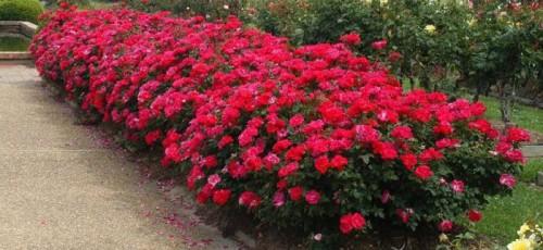 Компания «Цветы Башкирии», которая занимается оптовой и розничной продажей цветов, возможно, будет перепрофилирована