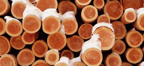 Лесопромышленная компания «Селена» подала в суд на правительство республики и министерство лесного хозяйства Башкирии