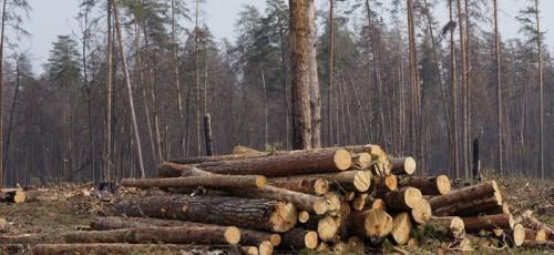В уфимском Парке лесоводов могут построить элитный дом