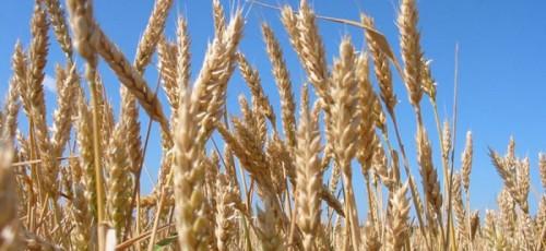 Точка зрения. Ильшат Фазрахманов высказался о проблеме экспорта зерна
