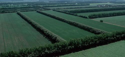 В республике появится новая программа по восстановлению защитных лесных полос с объемом финансирования 1,5-2,5 млрд рублей