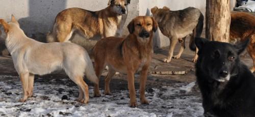 Уфа потратит на отлов и утилизацию безнадзорных агрессивных животных 5,5 млн рублей