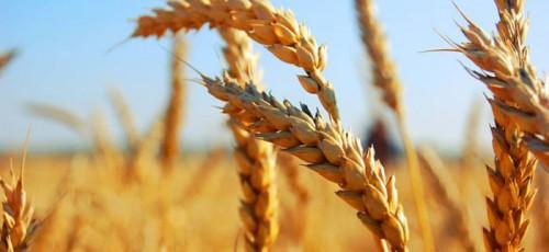 Лишь шестая часть страховых компаний Башкирии занимается сельхозстрахованием