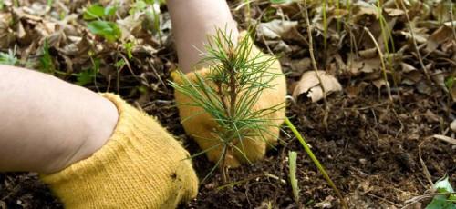 Госзакупки недели: Реконструкция проводов, посадка деревьев и схема обращения с отходами