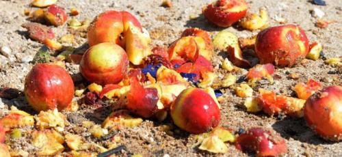 Россияне подписали петицию с требованием отменить указ об уничтожении еды