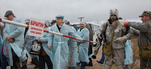 Африканская свиная чума: существует ли опасность для Башкирии?