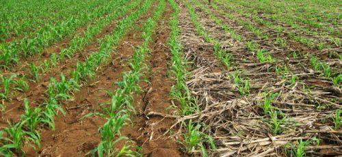 No-till решил: в республике продвигают новые технологии земледелия