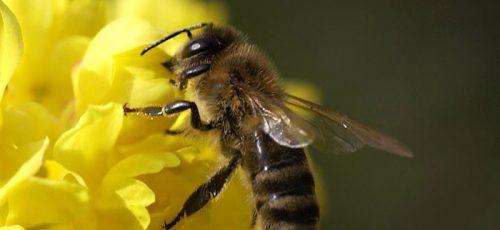 Количество завозных пчел в республике хотят ограничить введением карантина