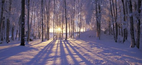 Как пережить зиму и дожить до весны?