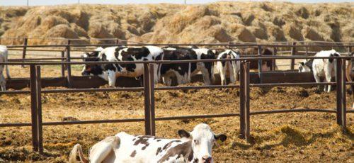 Развитие фермерства в Зауралье на примере одного из производителей