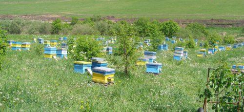 Массовая гибель пчел в Башкирии: миф или реальность?