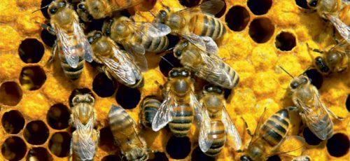 В Башкирии вновь опровергли сообщение о массовой гибели пчел