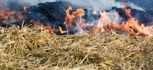 В лесах Башкирии ввели противопожарный режим
