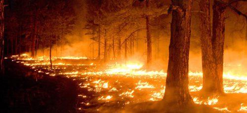Из-за лесных пожаров Башкирия потеряла более 1,5 млн рублей