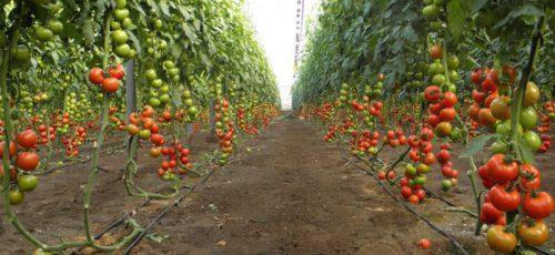 Итальянские инвесторы хотят вступить в республиканские кооперативы. В этом году на программу поддержки сельхозкооперации в Башкирии выделили 30 млн рублей