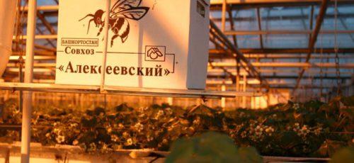 Для развития совхозов «Рощинский» и «Алексеевский» могут привлечь инвестора