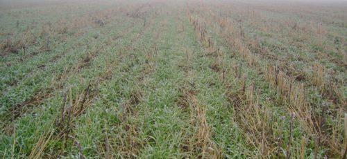 Из-за гибели урожая регион уже потерял 426 млн рублей. В Башкирии объявят чрезвычайное положение