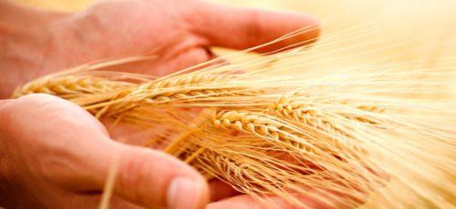 Фермеры смогут застраховать свою продукцию исходя из потребностей