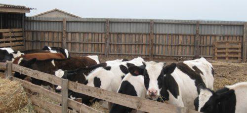 Крестьяне ждут потребителей у себя. Пока в стране сокращается число фермерских хозяйств, в Башкирии наблюдается рост