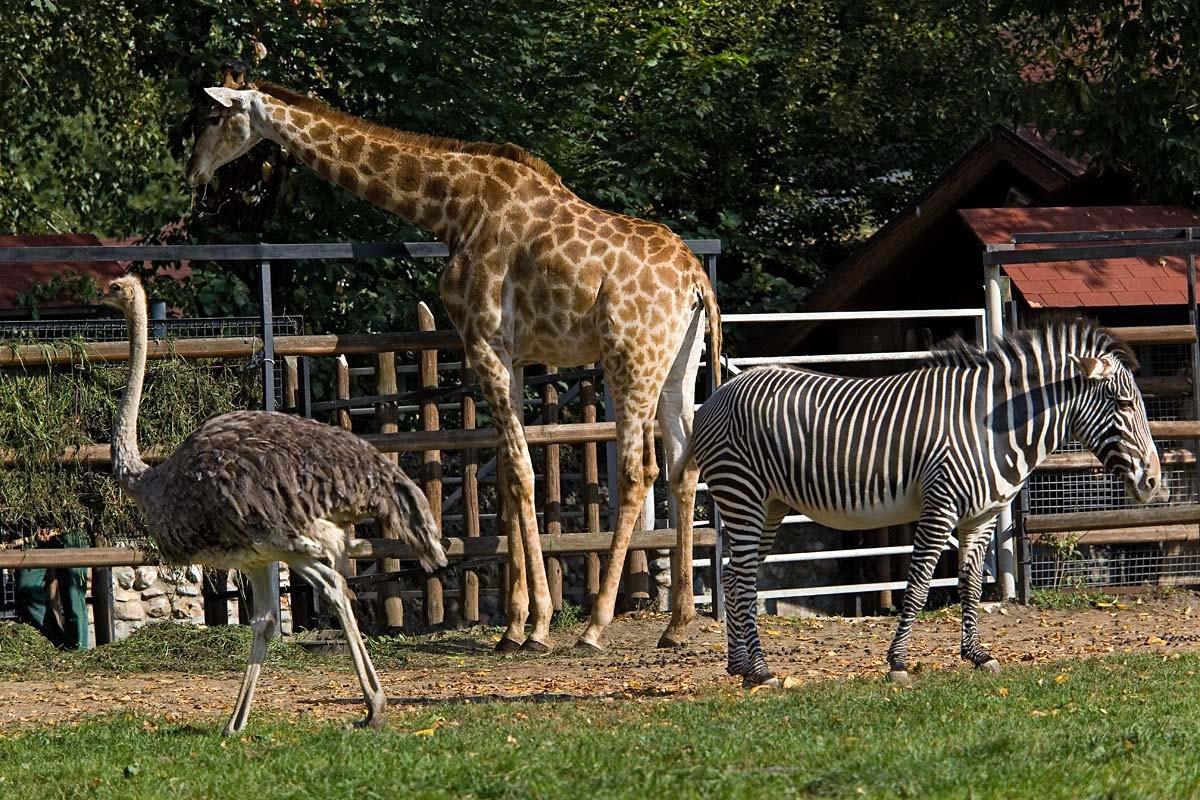 ВУфе появится зоопарк сестественной средой обитания животных