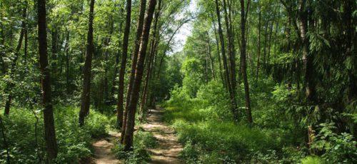 Вокруг Уфы создадут лесопарковый пояс. Отчуждать земли у собственников и пользователей участков не будут