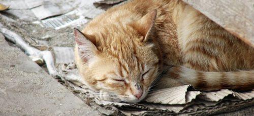 В Уфе построят приют для бездомных животных за 120 млн рублей