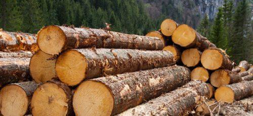 Сегодня Минлесхоз Башкирии начинает принимать заявки от предпринимателей на участие в аукционе по продаже лесных насаждений
