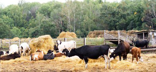Башкирия вошла во вторую группу федерального проекта по развитию сельхозкооперации в субъектах страны. В следующем году в республике планируют создать еще сто кооперативов