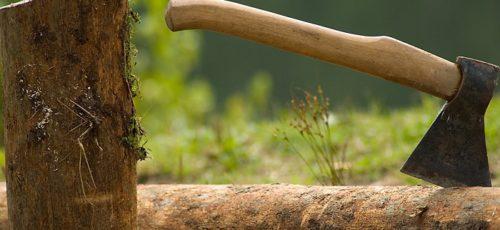 В этом году ущерб Башкирии от незаконной вырубки леса составил 35 млн рублей. Возместить удалось менее половины