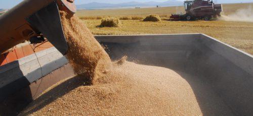 Объемы производства зерна в республике значительно выросли, однако падение цен свело результат на нет