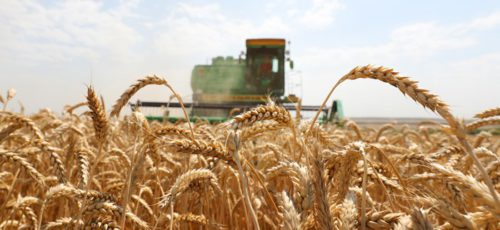 Как банки поддерживают агропромышленный комплекс?