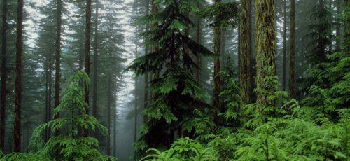 В Башкирии появится стратегия развития лесопромышленного комплекса до 2030 года. Разработчики обещают учесть интересы бизнеса, населения и государства