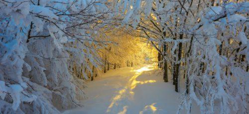 Все ближе наступление самого долгожданного зимнего праздника. В преддверии Нового года особенно хочется чудес и волшебства
