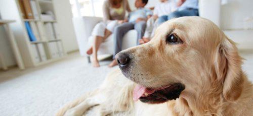 Все, как у людей: для домашних животных внедряют новые страховые продукты
