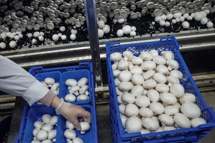 Предприятия по выращиванию грибов в 789