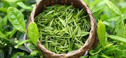 Ученые из университета Великобритании нашли лекарство от рака в зеленом чае