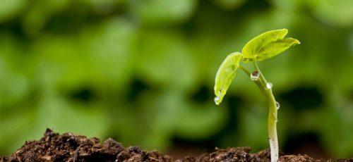 Разработка уфимского студента поможет аграриям избавиться от экономически невыгодных сельскохозяйственных культур