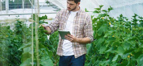 Вслед за врачами миллионерами могут стать и молодые аграрии
