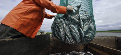 Рыболовы Башкирии используют лишь половину выделяемых квот
