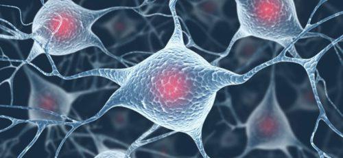 Американские ученые изучили механизм регенерации тела с помощью клеток животных