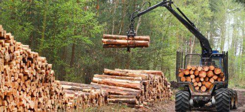 Башкирия выделит 600 млн рублей на поддержку лесопромышленного комплекса. Предприятия сэкономят на покупке спецтехники и создадут 2 тысячи новых рабочих мест, а бюджет получит дополнительные 4,5 млрд рублей налогов