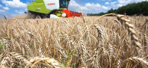 Экспорта не будет: в основных сельскохозяйственных регионах России засуха. По прогнозам экспертов, зерна хватит лишь для внутреннего рынка. В Башкирии все не так плохо
