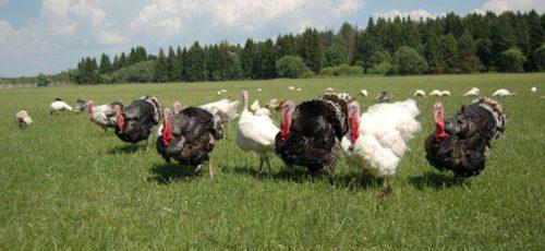 Башкирия оказалась в кольце регионов, зараженных птичьим гриппом