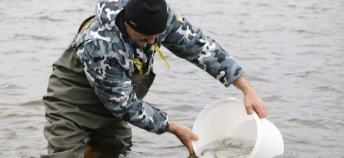 «Черный» рыбоводческий рынок в Башкирии: миф или реальность?