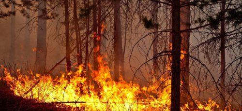 Зариф Байгускаров об ужесточении ответственности должностных лиц за лесные пожары