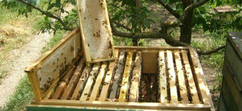 Башкирия наращивает экспорт и объемы производства товарного меда. На эти цели до 2030 года потратят свыше 600 млн рублей
